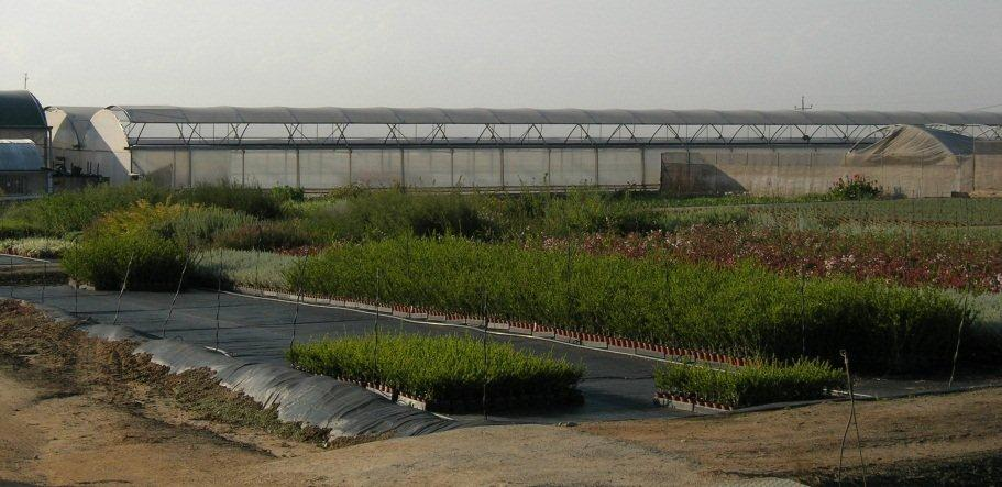 Flood and drain trees nursery Spain