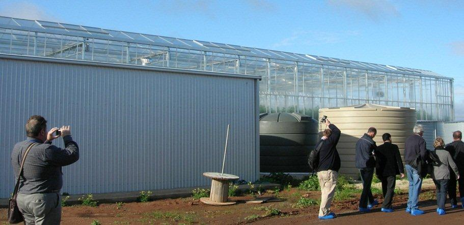 tomatoes greenhouse adelaide