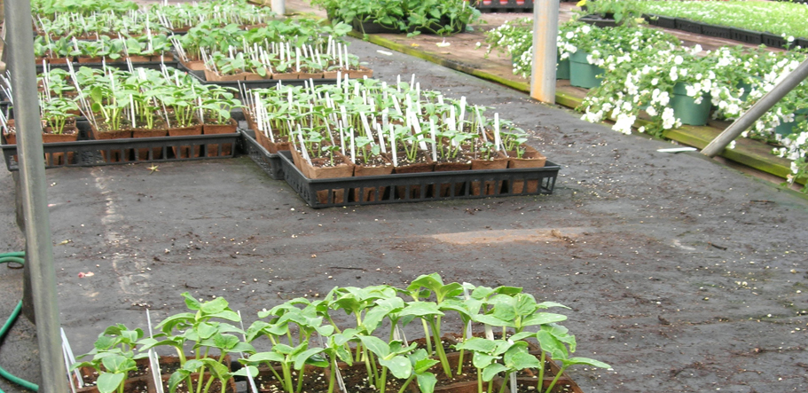 Capilary matting seedlings in Canada